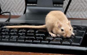 De ICT RAT Ransomware